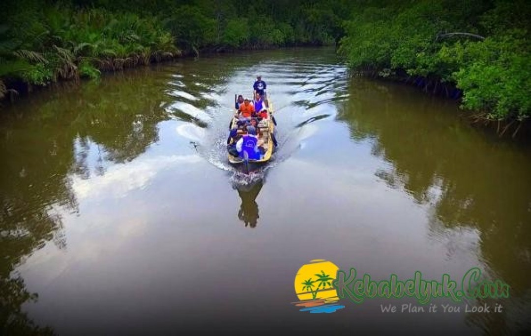 Serunya Menyusuri Hutan Mangrove Sungai Kepoh