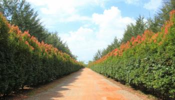 Agrowisata Pangkalpinang Bangka Botanical Garden (BBG)