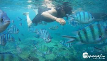 Menyelam Bersama Habitat Ikan-ikan Centil Ini Di Belitung