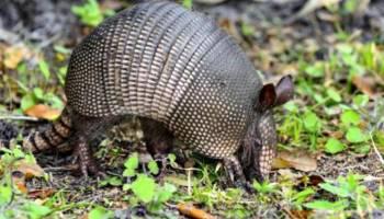 Spesies Hewan Pulau Bangka yang Hampir Punah